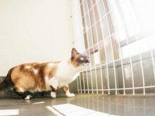 脱出しようとしている猫